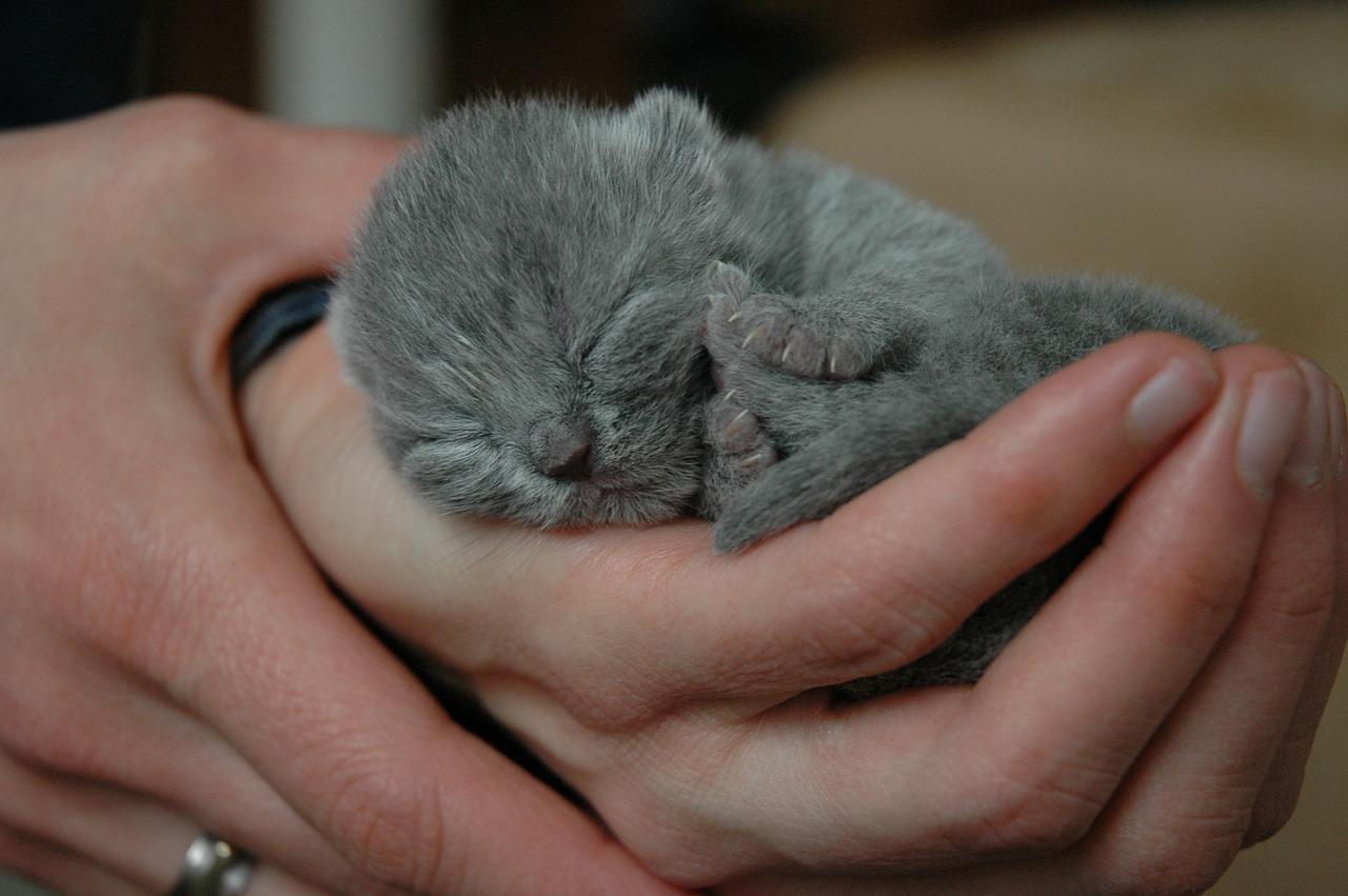 e1b56b969c2a Βρήκα νεογέννητα γατάκια. Τι να κάνω  — Tετράποδη αγάπη