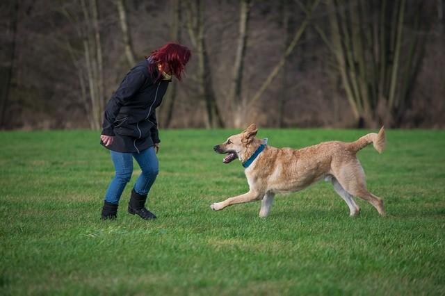 Νευρικότητα σκύλου